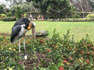 Tempat Eksotis Di Indonesia Ini Cocok untuk Belajar Wildlife Photography
