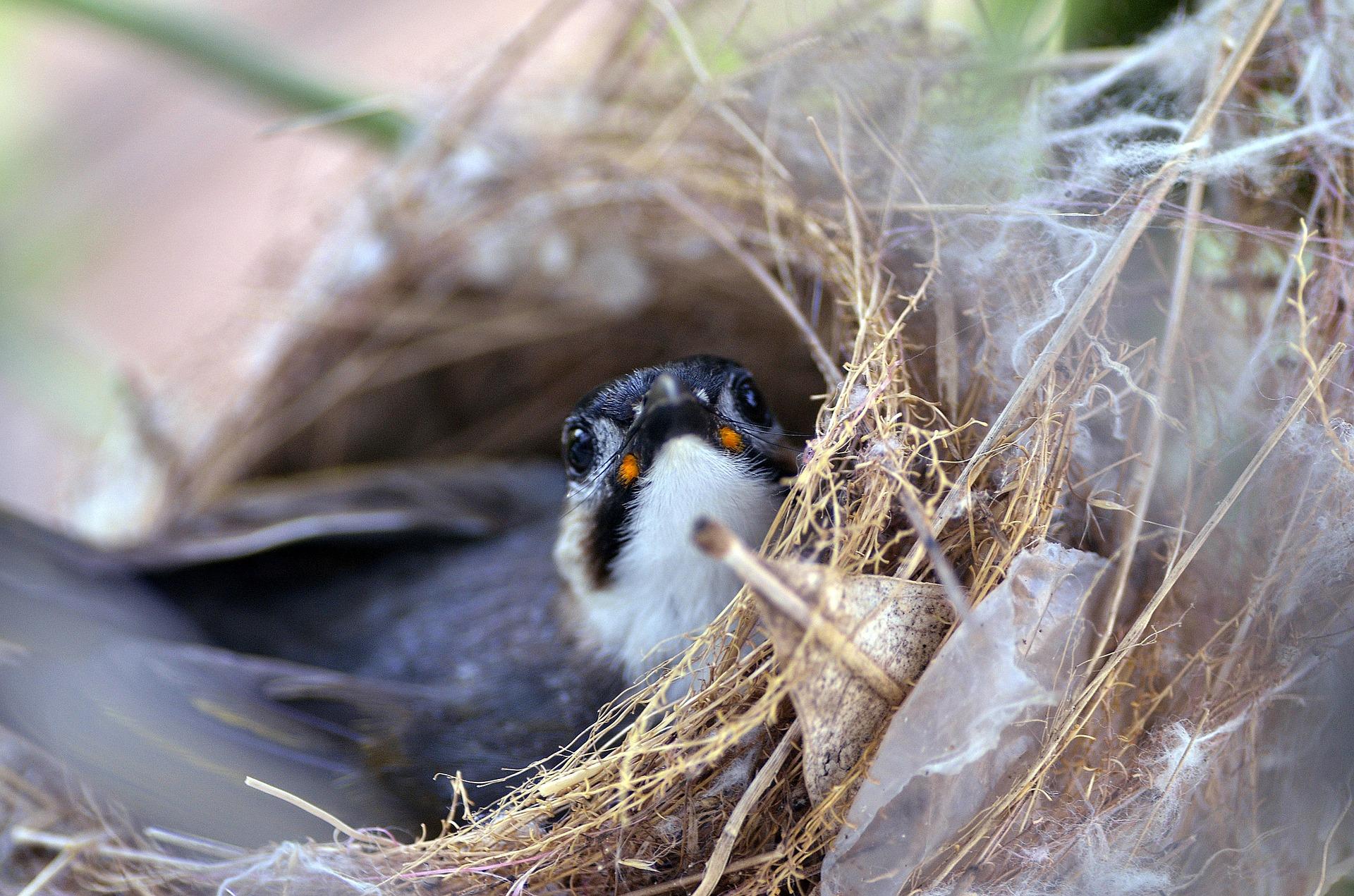 Suka Mengamati Hewan Liar Seperti Burung, Anda Harus Mengenal Tehnik Berikut