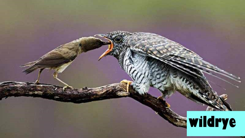 Mengenal Hobi Mengamati Burung Yang Sangat Menarik