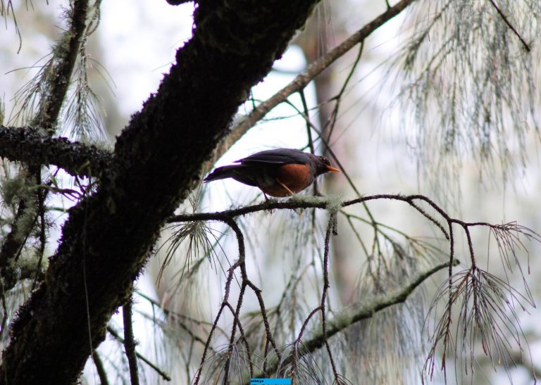 Kiprah Birdwatcher, Tak Hanya Mengamati Burung, Tapi Juga Konservasi