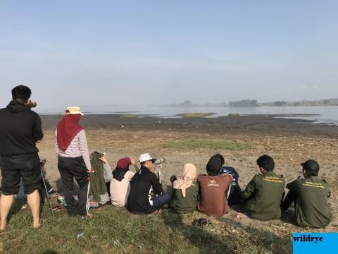 Cinta Mahasiswa untuk Burung Migran di Muara Kali Progo, Yogyakarta