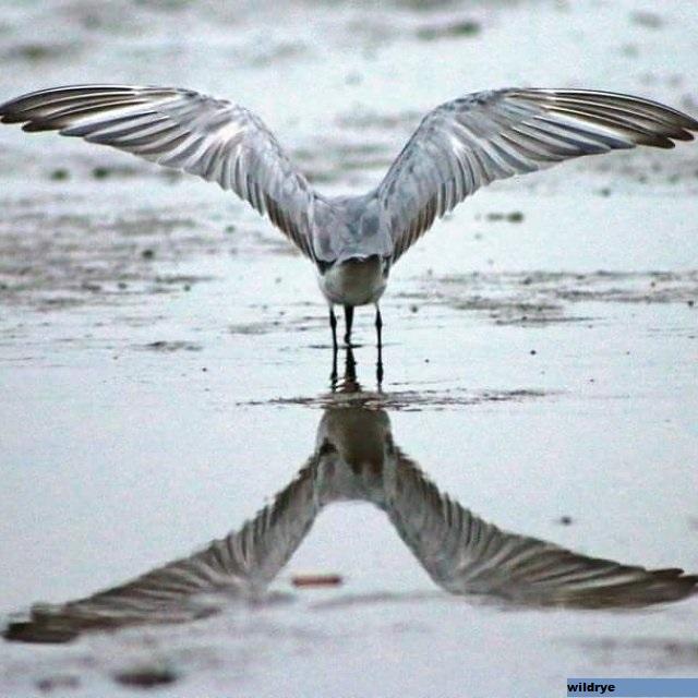 Metode Pengamatan Burung