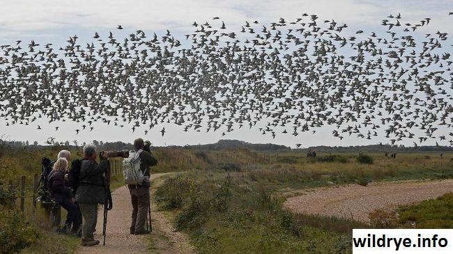 Mengamati Burung Merupakan Hobi Yang Sehat dan Bahagia