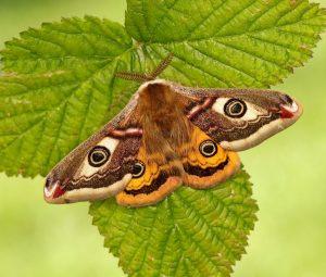 7 Blog Pengamat Wildlife yang Bisa Kamu Ikuti