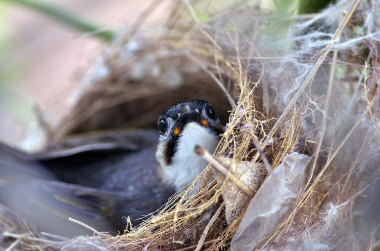 Suka Mengamati Hewan Liar Seperti Burung? Anda Harus Mengenal Tehnik Berikut