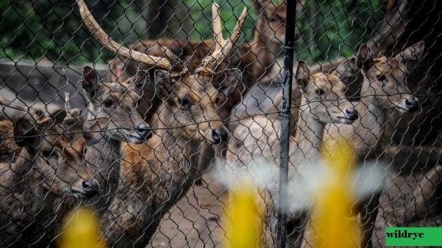 Pengamat Satwa Liar IPB: Pandemi Corona, Kebun Binatang Sangat Kritis