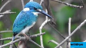 Mengenal Pengamatan Burung (Birdwatching)